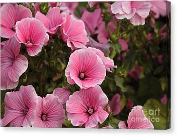 Rose Mallow Flowers Canvas Print by Erin Paul Donovan