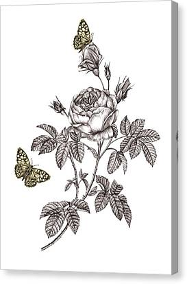 Rose Placement Canvas Print by Stephanie Davies