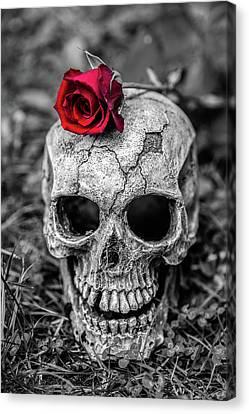 Rose Skull Canvas Print by Martina Fagan