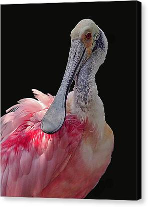 Roseate Spoonbill Canvas Print by Larry Linton