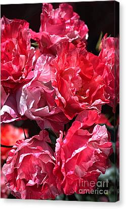 Roses Fresh For You Canvas Print by Joy Watson