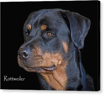 Rottweiler Canvas Print by Larry Linton