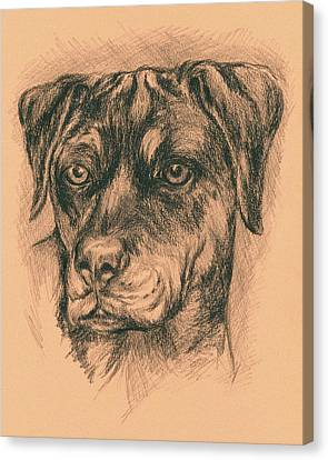 Rottweiler Mix In Charcoal Canvas Print by MM Anderson