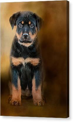 Rottweiler Puppy Canvas Print by Jai Johnson