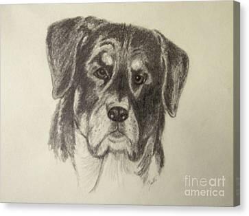 Rottweiler Canvas Print by Suzette Kallen