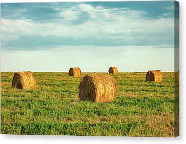 Round Hay Bales Canvas Print by Todd Klassy
