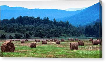 Round Hay Bales, Virginia Canvas Print by Thomas R Fletcher