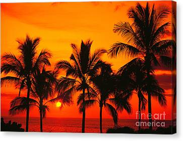 Row Of Palms Canvas Print by Bill Schildge - Printscapes
