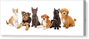 Row Of Puppies And Kittens Canvas Print by Susan  Schmitz
