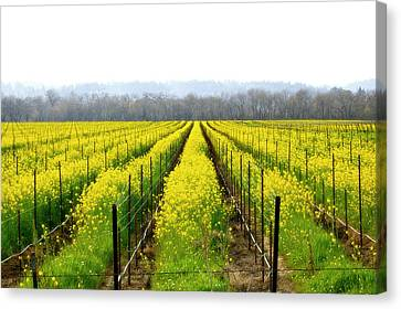 Rows Of Wild Mustard Canvas Print by Tom Reynen