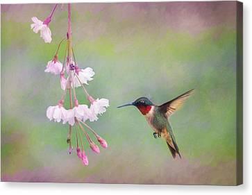 Ruby-throated Hummingbird Canvas Print by Lori Deiter