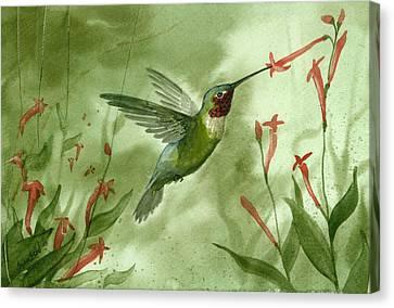Ruby Throated Hummingbird Canvas Print by Sean Seal