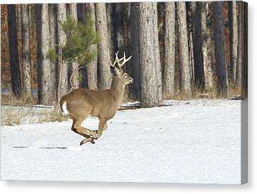 Running Buck Canvas Print by Marty Timmerman