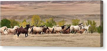 Running Free Canvas Print by Leland D Howard