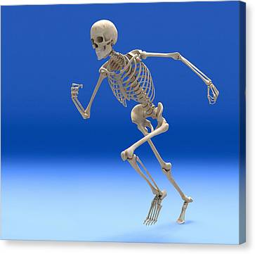 Running Skeleton, Artwork Canvas Print by Roger Harris