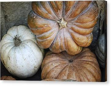 Rustic Pumpkins Canvas Print by Joan Carroll