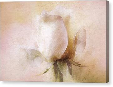 Rustic Rose Canvas Print by Terry Davis