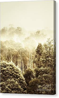 Rustic Tasmanian Rural Forest Canvas Print by Jorgo Photography - Wall Art Gallery