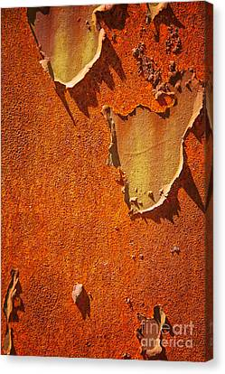 Rusty Old Metal Background Canvas Print by Sophie McAulay