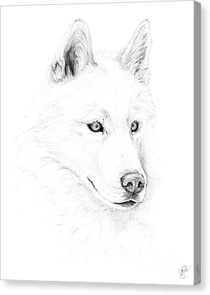 Saber A Siberian Husky Canvas Print by Stacey May
