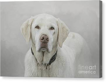 Sad Eyes.... Canvas Print by Brenda Bostic