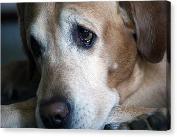 Sad Pup Canvas Print by Kristin Smith