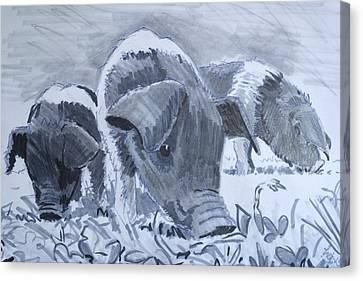 Saddleback Piglets Canvas Print by Mike Jory