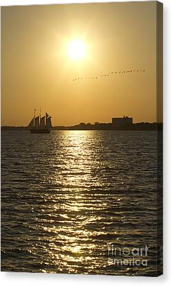 Sailboat Sunset On The Charleston Harbor Canvas Print by Dustin K Ryan