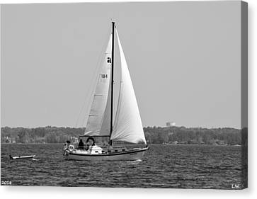 Sailing Black And White Canvas Print by Lisa Wooten