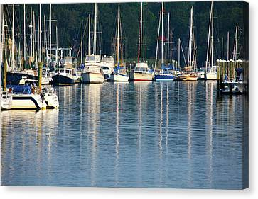 Sails At Dock Canvas Print by Karol Livote
