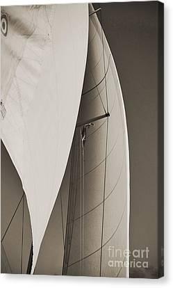 Sails Canvas Print by Dustin K Ryan