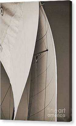 Sails Canvas Print by Dustin K Ryan