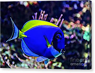 Saltwater Fish Blue Tang Canvas Print by Marvin Blaine