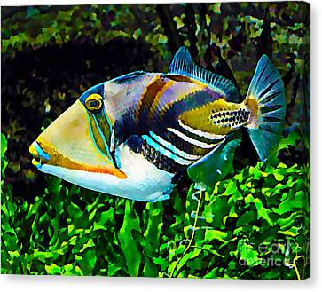 Saltwater Triggerfish Canvas Print by Marvin Blaine