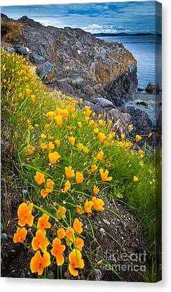 San Juan Poppies Canvas Print by Inge Johnsson