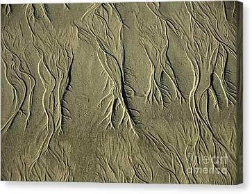 Sand Pattern Canvas Print by Marc Bittan