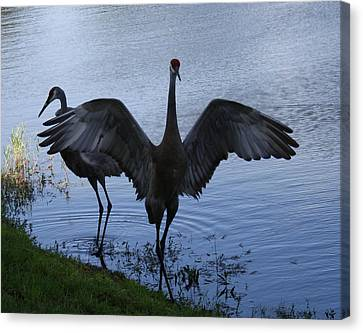 Sandhill Cranes 2 Canvas Print by Larry Underwood
