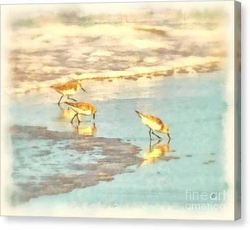 Sandpipers Along The Shoreline Canvas Print by Betsy Foster Breen