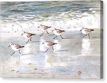 Sandpipers On Siesta Key Canvas Print by Shawn McLoughlin