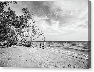 Sanibel Island Morning Canvas Print by Scott Pellegrin