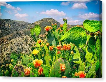 Santiago Canyon Canvas Print by Mariola Bitner