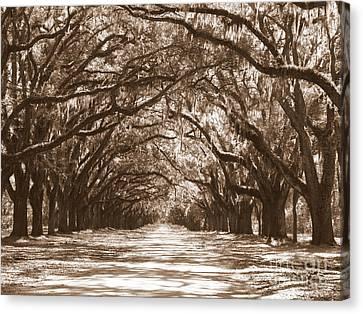 Savannah Sepia - Glorious Oaks Canvas Print by Carol Groenen