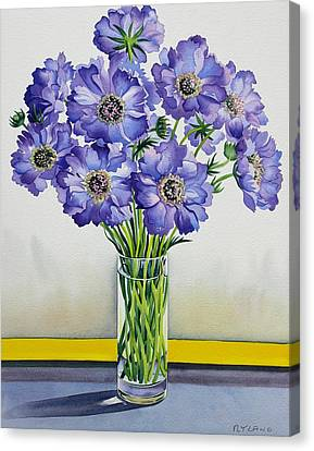 Scabious With Yellow Band Canvas Print by Christopher Ryland