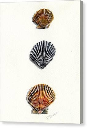 Scallop Shell Trio Canvas Print by Sheryl Heatherly Hawkins