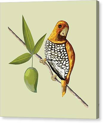 Scaly Breasted Munia D Canvas Print by Thecla Correya