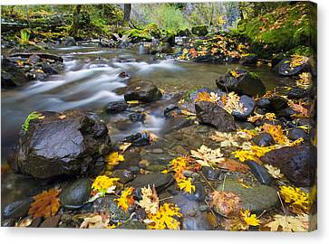 Scattered About Canvas Print by Mike  Dawson
