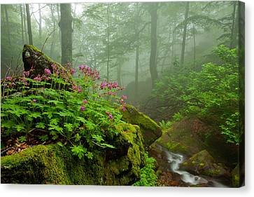Scent Of Spring Canvas Print by Evgeni Dinev
