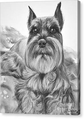 Schnauzer Drawing Bailey Canvas Print by Kate Sumners