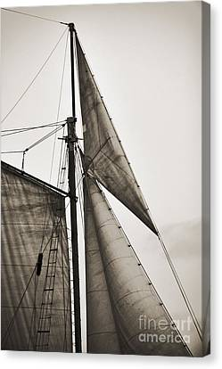 Schooner Pride Tall Ship Yankee Sail Charleston Sc Canvas Print by Dustin K Ryan