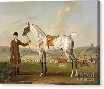 Scipio - Colonel Roche's Spotted Hunter Canvas Print by Thomas Spencer